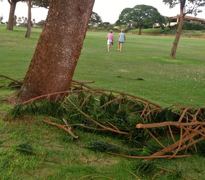 Storm damage on the golf course.