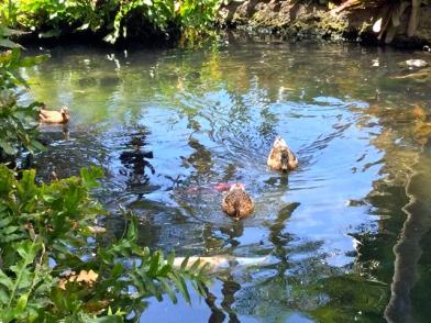 Tranquility at Hawaiian Village